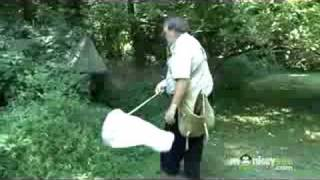 Insect Collecting - General Preparation of Bugs