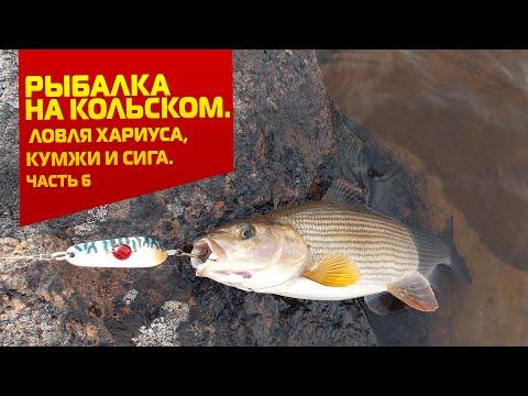 Рыбалка на Кольском. Ловля хариуса кумжи и сига. Часть 6