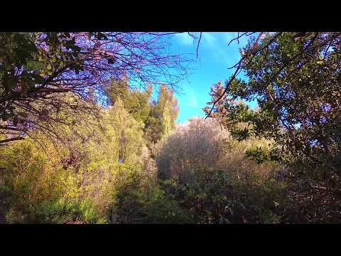 The MISTRAL blows - PROVENCE in full storm - Natural ambient sounds