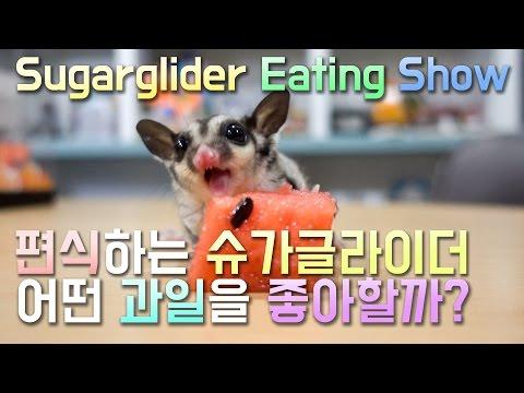 4개월차 슈가글라이더 먹방 모음 (Sugar glider ea