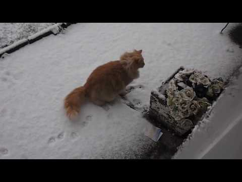 Sandy the kitten sees snow for first time