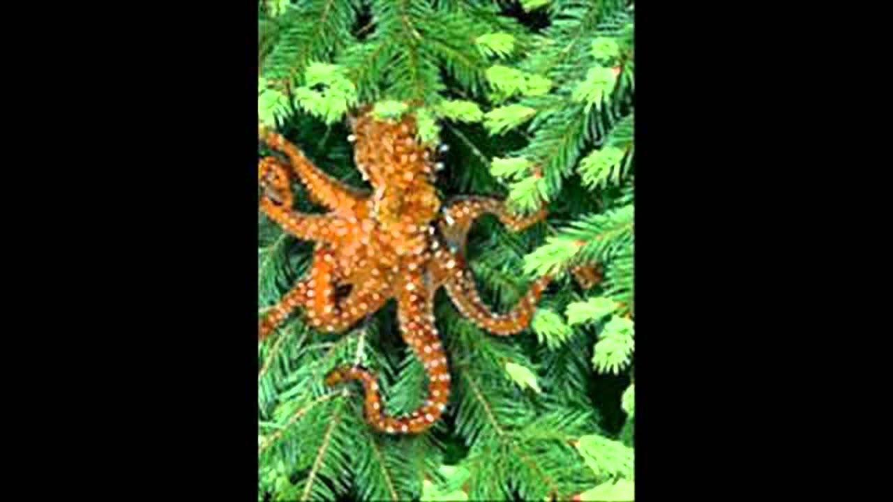 Northwest Tree Octopus - YouTube