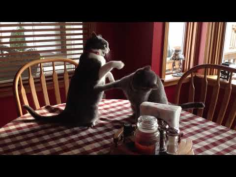 Funny Cats Compilation 2017   Best Funny Cat Videos Ever2