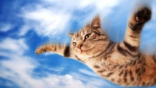 Cats Who Think They Can Fly