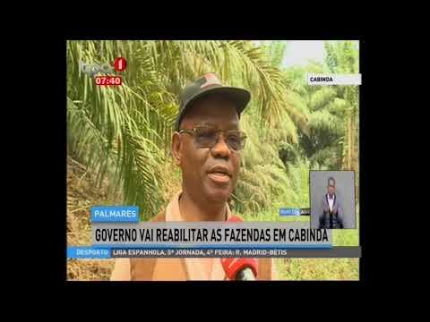 Cabinda Governo Governo vai reabilitar as fazendas