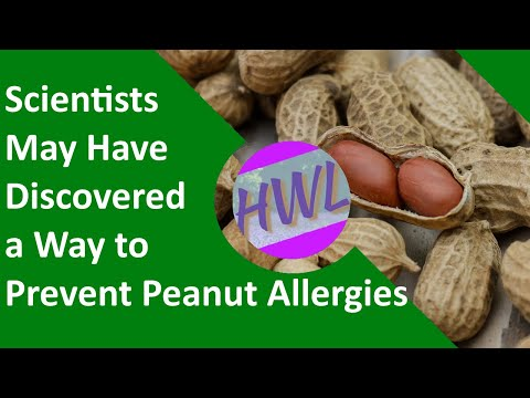 Scientists may have discovered a way to prevent peanut allergies