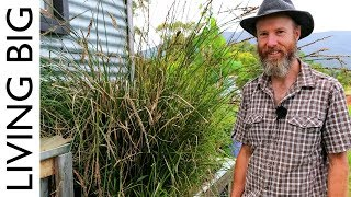In this episode, we return to Murray's tiny house on wheels in the Yarra Valley, Victoria, Australia, where he has set up a clever grey water treatment system for ...