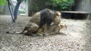 Live Sex on the London Zoo!!!!
