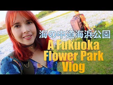 Incredible Blue Fields in Fukuoka  - 海の中道海浜公園のネモフィラをみて来た