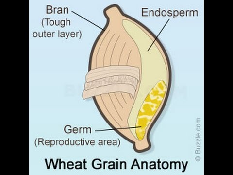 What is the Difference Between Wheat Germ and Wheat Bran