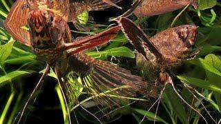 Самые необычные аквариумные рыбки/The most unusual aquarium fish