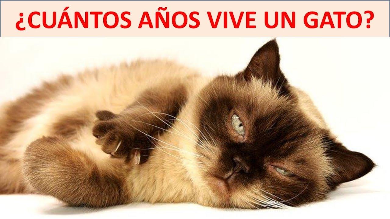 Cuantos Años Vive Un Gato Youtube