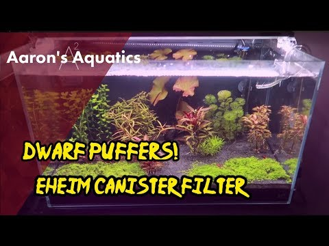 LOST Shrimp FOUND! | Cleaning Eheim Canister Filter