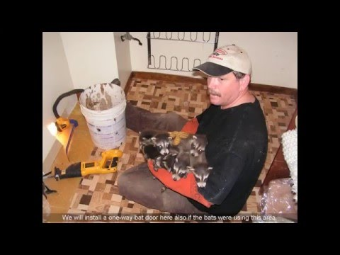 Average Cost Of Bat Removal From Attic
