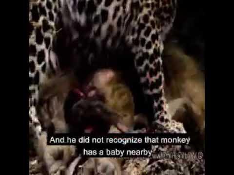 Çox Duyğulanacağvız Bir Video