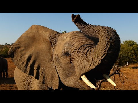 China's ivory trade sees big declines