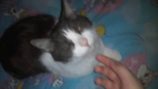 Я осматриваю мою кошку Асю и песня про Асю.