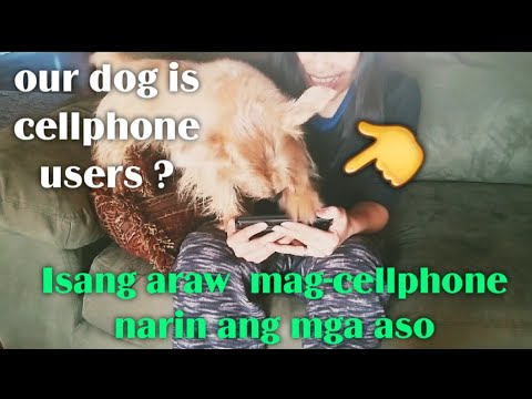 Our dog is cellphone user / Pati aso nagsi-cellphone narin