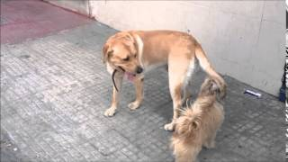 Leo And Piqué | Funny Video -- Dog To Dog -- Hd