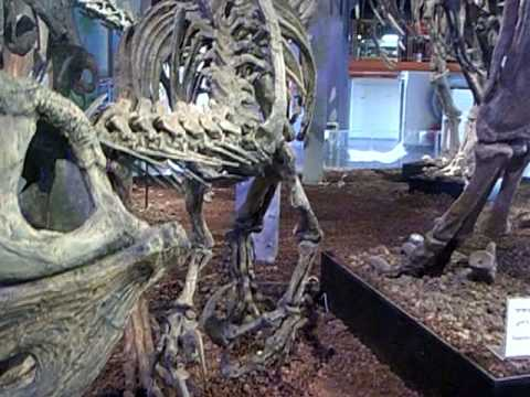 Giganotosaurus 2nd largest predator, Argentina Dinosaurs exhibition. MadaTech -6