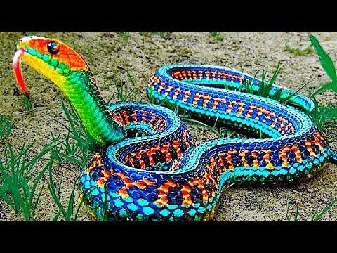 13 Seltenste Schlangen Der Welt Youtube