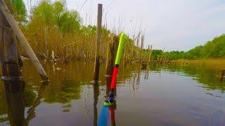 Забрался на лесное озеро Рыбалка на утренней зорьке на поплавок Клёв карася на маховую удочку