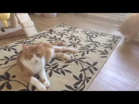模様替えが気になる猫と気にならない猫『保護猫るる らら物語』