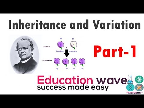 Biology Principles of inheritance and variation  class 12 (  Genes , Autosomes  ) In Hindi Part-1 thumbnail