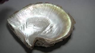 Turning Sea Shells Into Gold