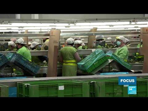 Espagne: les travailleurs agricoles en première ligne face au Covid-19