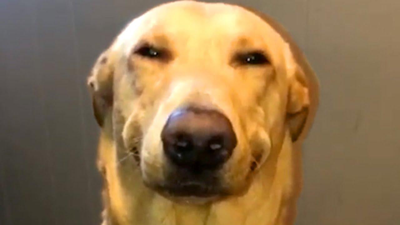 Guilty Pet Face Reactions | Funny Pet Videos
