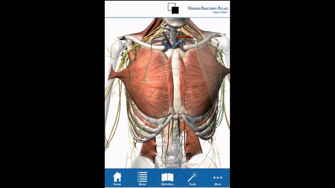 Human Anatomy Atlas - Android tablet/phone tutorial - YouTube