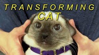 transforming-cat
