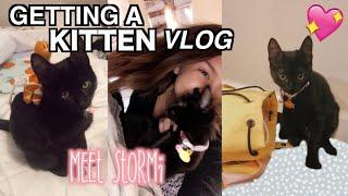 I GOT A CAT! + CAT SUPPLY SHOPPING *vlog*