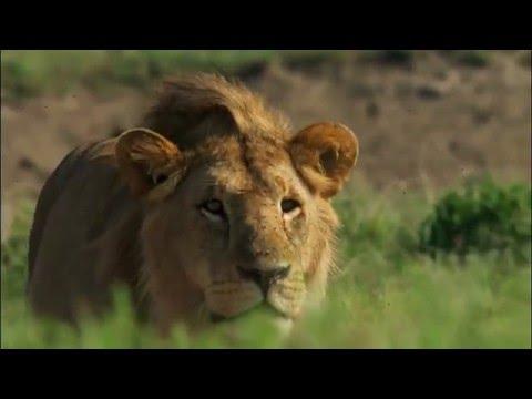 BBC  Как устроена природа - Пастбища
