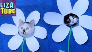 СМЕШНЫЕ КОТЫ Новое ПРЕВРАЩЕНИЕ котиков Лиза и питомцы LizaTube