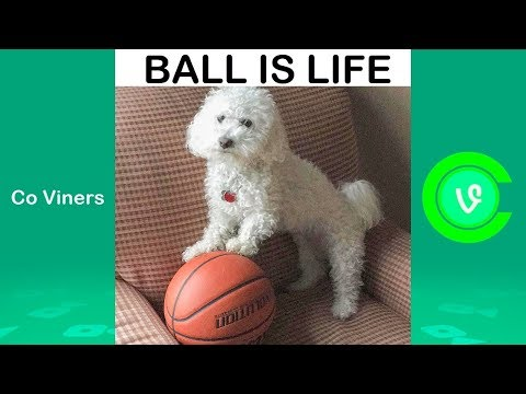 Ultimate Quincy Vine Compilation 2018   Funny Quincy Vines (w/Titles)