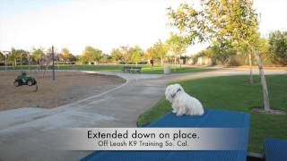 Maltese Showing Amazing Obedience! Murrieta California Dog Trainers.