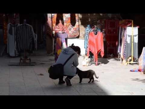 Tabajone Maroko - Essaouira 19.01.2014