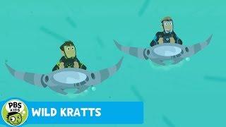 Wild Kratts: Sailfish Speed thumbnail