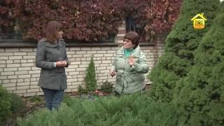 видео Как оградить растения от подгорания на весеннем солнце?