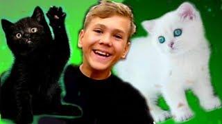БЕЛАЯ кошка VS ЧЁРНАЯ кошка. СУПЕР ЧЕЛЛЕНДЖ!!!