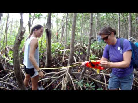 BIOS-The Marine Science Internship