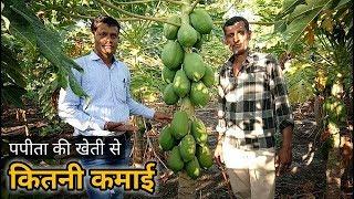 पपीता की खेती से कितनी कमाई | How much profit can get in Papaya Farming
