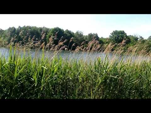 LG Optimus L9 II Video Sample