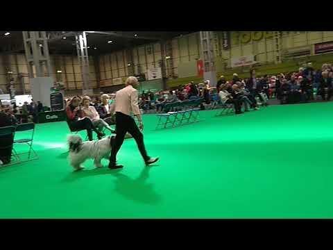 Polish Lowland Sheepdog Crufts 2018 Bitch Challenge