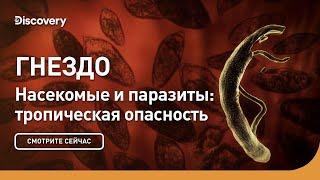 Гнездо | Насекомые и паразиты: тропическая опасность | Discovery