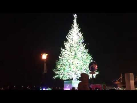 It is Hokkaido, the famous Christmas tree in the port of Hakodate.