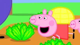 Peppa Pig English Episodes | Peppa Pig Loves Vegetables | Peppa Pig Official