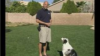 How To Train A Dog To Sit : Visuals In Training A Dog To Sit